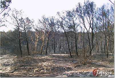 incendio a torre mozza nel 2003
