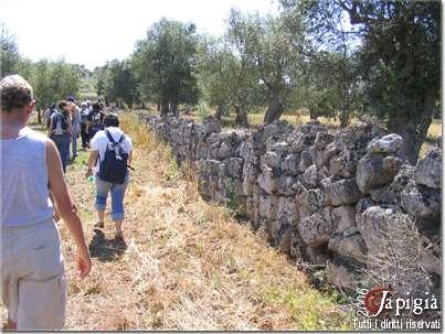 mura messapiche nella campagna di giuggianello