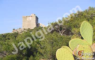 torre dell'alto a santa caterina di nardò