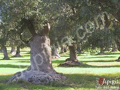 avetrana: area archeologica